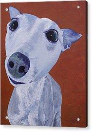 Blue Dog Acrylic Print by Trish Campbell