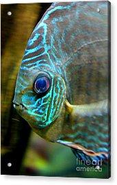 Blue Fish - Digital Painting Acrylic Print by Carol Groenen