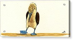 Blue Footed Booby Acrylic Print by Juan  Bosco