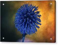 Blue Globe Thistle  Acrylic Print by Maria Angelica Maira