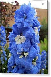 Blue Glory Acrylic Print by Mike Podhorzer