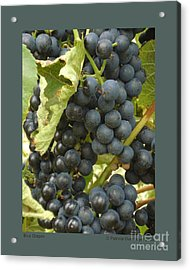 Blue Grapes Acrylic Print by Patricia Overmoyer