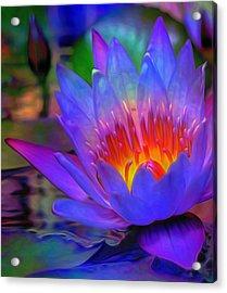 Blue Lotus Acrylic Print by  Fli Art