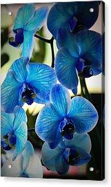Blue Monday Acrylic Print by Mandy Shupp