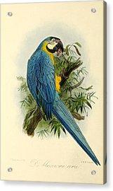 Blue Parrot Acrylic Print by J G Keulemans