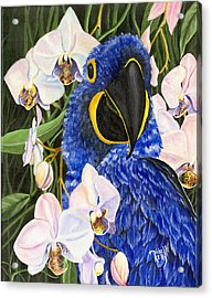 Blue Parrot  Acrylic Print by Michelle Kelly