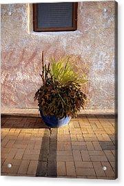 Blue Planter Morning Sun Acrylic Print by Ann Powell