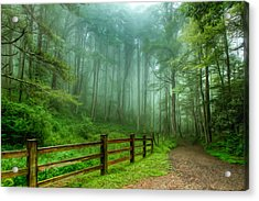 Blue Ridge Parkway - Foggy Country Road And Trees II Acrylic Print by Dan Carmichael