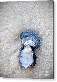 Blue Seashells Acrylic Print by Liz Masoner