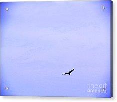 Blue Solo Flight Acrylic Print by Tina M Wenger