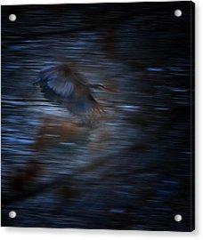 Blue Streak Acrylic Print by Robert McCubbin