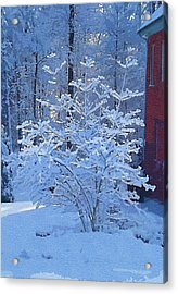 Blue Tree Acrylic Print by Mitchell Gibson