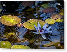 Blue Water Lily Pond Acrylic Print by Brian Harig
