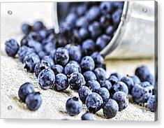 Blueberries Acrylic Print by Elena Elisseeva