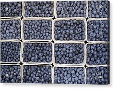 Blueberries Acrylic Print by Tim Gainey