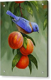 Bluebird And Peaches Greeting Card 1 Acrylic Print by Crista Forest