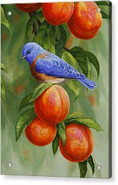 Bluebird And Peaches Greeting Card 2 Acrylic Print by Crista Forest