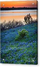 Grapevine Lake Bluebonnets Acrylic Print by Inge Johnsson
