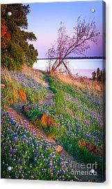 Bluebonnet Trail Acrylic Print by Inge Johnsson