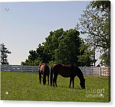Bluegrass Summer Day Acrylic Print by Roger Potts
