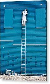 Blues Expert Acrylic Print by David Scott