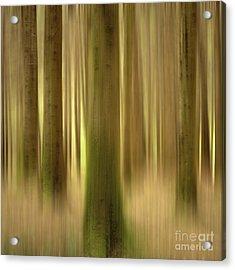 Blurred Trunks In A Forest Acrylic Print by Bernard Jaubert