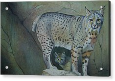 Bobcat And Baby Acrylic Print by Carmen Durden
