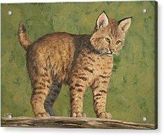 Bobcat Kitten Acrylic Print by Crista Forest