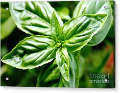 Bodacious Basil Acrylic Print by French Toast