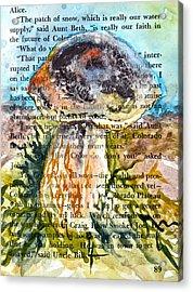 Boletus Edulis Close Up Acrylic Print by Beverley Harper Tinsley