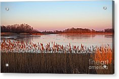 Bombay Hook Sunrise Acrylic Print by Robert Pilkington