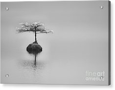 Bonsai At Fairy Lake Acrylic Print by Carrie Cole