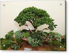 Bonsai Treet - Us Botanic Garden - 01131 Acrylic Print by DC Photographer