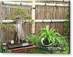 Bonsai Treet - Us Botanic Garden - 01132 Acrylic Print by DC Photographer