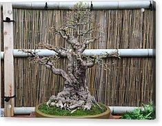 Bonsai Treet - Us Botanic Garden - 01137 Acrylic Print by DC Photographer