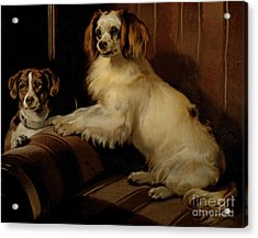 Bony And Var Acrylic Print by Sir Edwin Landseer