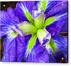Boothbay Violet With Chartreuse Acrylic Print by Bill Caldwell -        ABeautifulSky Photography