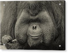 Bornean Orangutan II Acrylic Print by Lourry Legarde