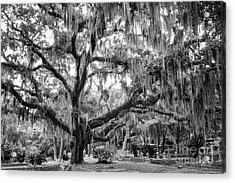 Bosque Bello Oak Acrylic Print by Dawna  Moore Photography