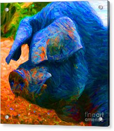 Boss Hog - 2013-0108 - Square Acrylic Print by Wingsdomain Art and Photography