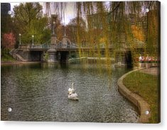 Boston Public Garden Swans Acrylic Print by Joann Vitali