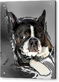 Boston Terrier.  Channeling Peter Lorre Acrylic Print by Peter Mix