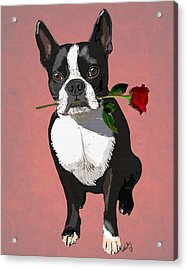 Boston Terrier With A Rose In Mouth Acrylic Print by Kelly McLaughlan