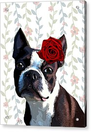 Boston Terrier With A Rose On Head Acrylic Print by Kelly McLaughlan