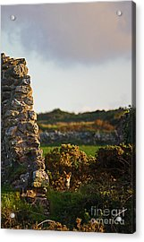 Botallack Fox At Sunset Acrylic Print by Terri Waters