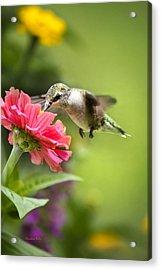 Botanical Hummingbird Acrylic Print by Christina Rollo
