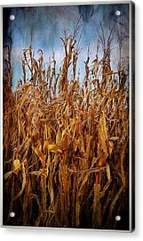 Bountiful Harvest Acrylic Print by Julie Dant