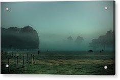 Bovines In The Mist Acrylic Print by Chris Fletcher