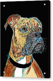 Boxer - Bud Acrylic Print by Bert Hornbeck