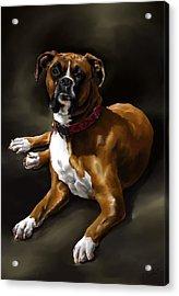 Boxer Acrylic Print by Cassandra Gallant